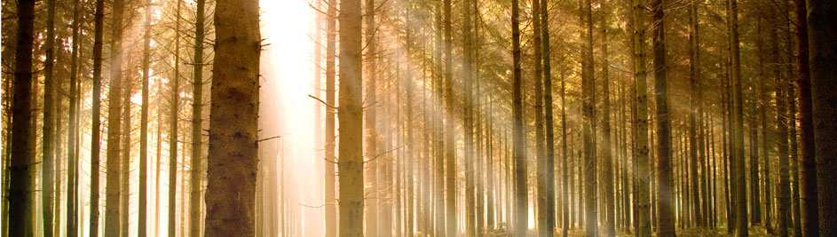 Spreewald – Erholung im Biosphärenreservat