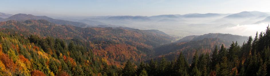 Der Schwarzwald – Naturpark und Weinregion