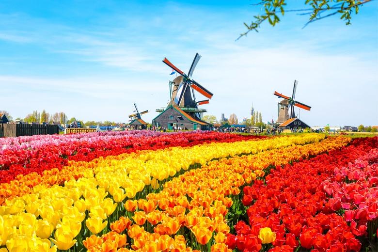 Amsterdam Hotel Tulip