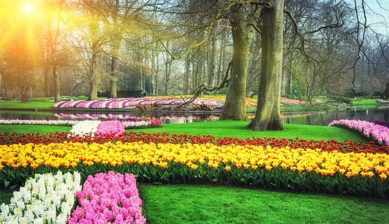 Keukenhof Sonnenschein Tulpen