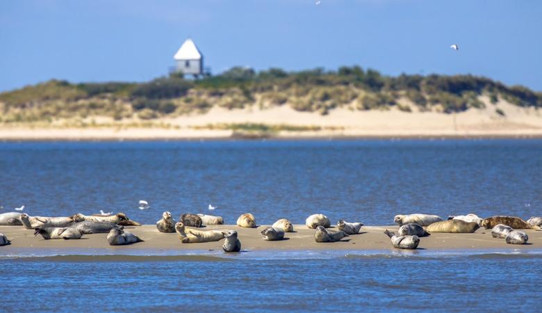 Christi Himmelfahrt: Seehundbank an der Nordsee